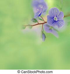 prado, flores azuis