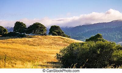 prado, ponto, nacional, luz, litoral, pôr do sol, califórnia, reyes, sul