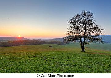 prado, sol,  -, árvore, pôr do sol,  panorama, sozinha, névoa