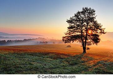 prado, sol, árvore, pôr do sol, sozinha, névoa