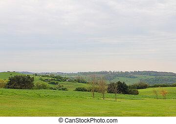 prado verde, árvores