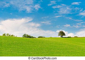 prado verde, com, árvores, em, horizonte, azul, céu nublado