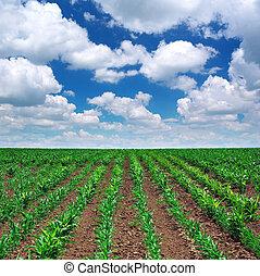 prado verde, de, filas