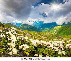 prados alpinos, em, a, cáucaso, montanhas.
