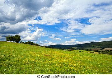 prados, verão, amarelo floresce