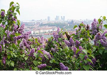 Prague, flowers