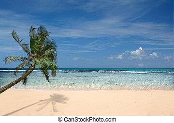 praia, árvore palma, solitário
