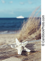 praia, árvore, starfish, tronco