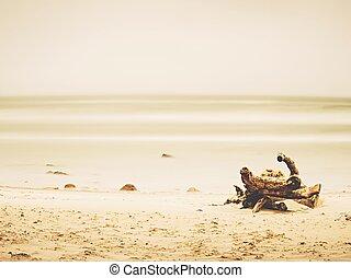 praia., árvore velha, lavado cima, mar areia, tronco, vazio