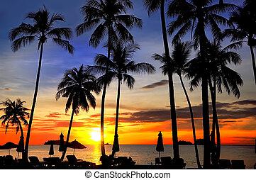 praia areia, pôr do sol, trópico, palmas, coco