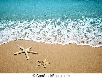 praia areia, starfish