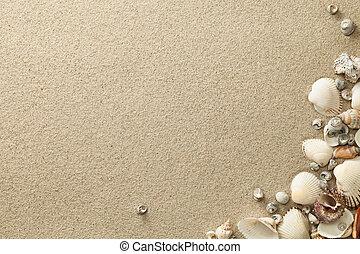 praia, arenoso, fundo, conchas
