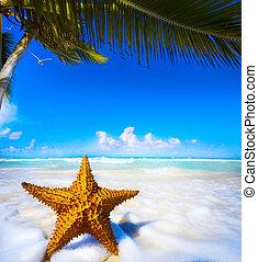 praia, arte, estrela mar