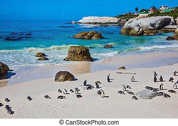 praia, atlântico, arenoso