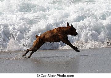 praia, cão, tocando