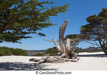 praia, carmel, califórnia, carmel
