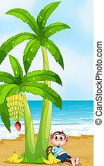 praia, cheio, estômago, macaco