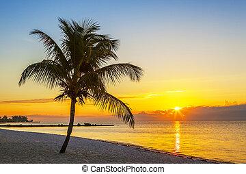 praia, com, árvore palma, em, pôr do sol
