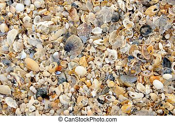 praia, conchas