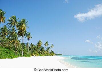 praia, coqueiros, paraisos
