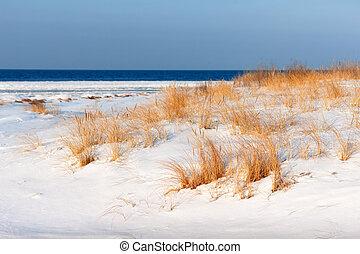 praia, dourado, capim, neva-coberto