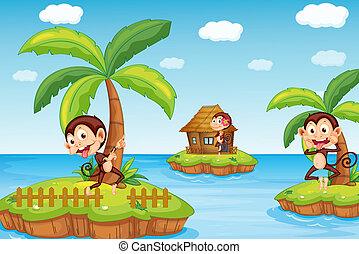 praia, macacos