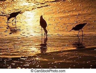praia, pássaros