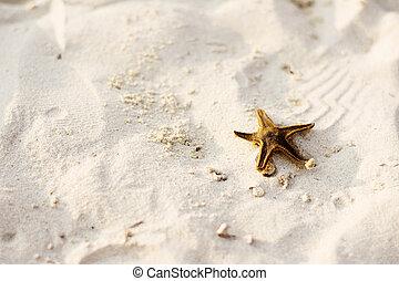 praia, peixe, estrela, arenoso