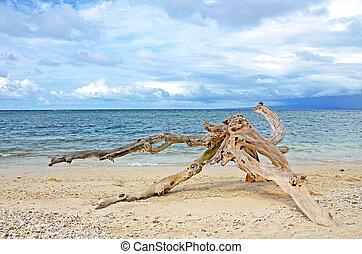 praia, saída, lavado, arenoso, driftwood