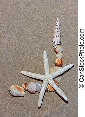 praia, seashell