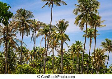 praia, selvagem, ilha, crescer, tropicais, coco, oceânicos, palmas, selva