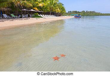 praia, toro, starfish, bocas, del, panela