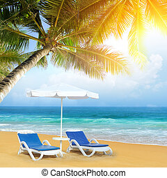 praia tropical, árvore palma