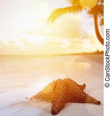 praia tropical, arte, férias