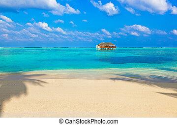 praia tropical, em, maldives