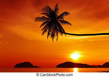 praia tropical, em, pôr do sol