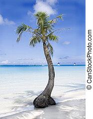 praia tropical, palma