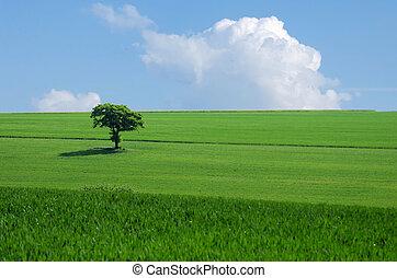 praire, arbre