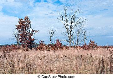Prairie and Oak Savanna Habitat