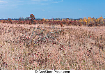 Prairie and Savanna at Necedah