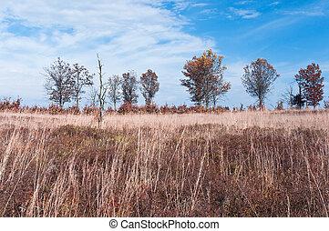 Prairie and Savanna Autumn Landscape