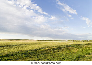 prairie, ciel, paysage