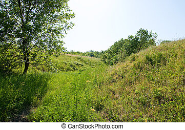 prairie, ciel, vert