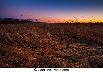 prairie, crépuscule