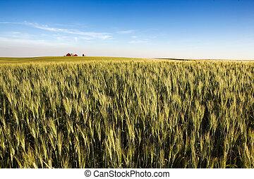 prairie, cultures