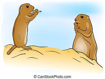 prairie dog - Prairie dogs on the sand