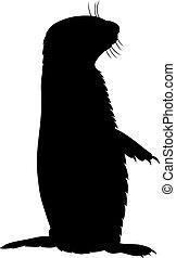 Prairie dog, shade picture