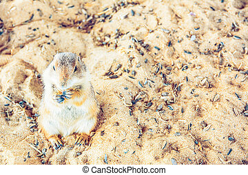 Prairie Dog stand and eat food