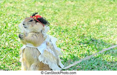 Prairie Dogs women dressed in long skirts