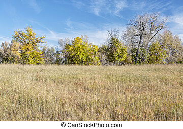 prairie fall scenery in northern Colorado with some trees in...